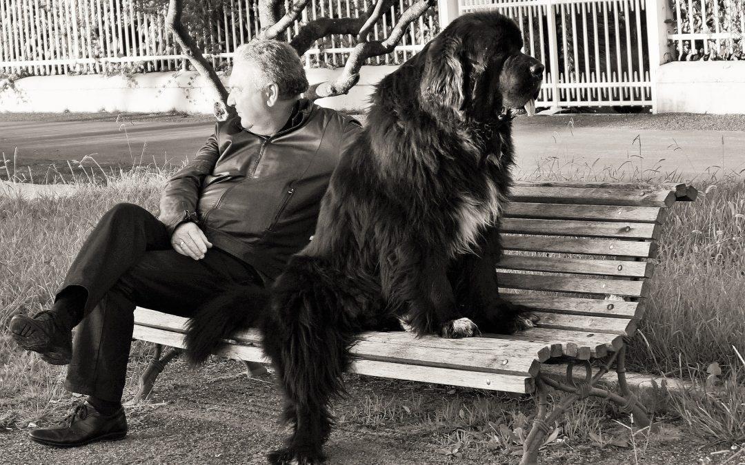 Lo stress del padrone sui cani