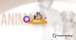 corso ANIMALI www.gabrielevico.com